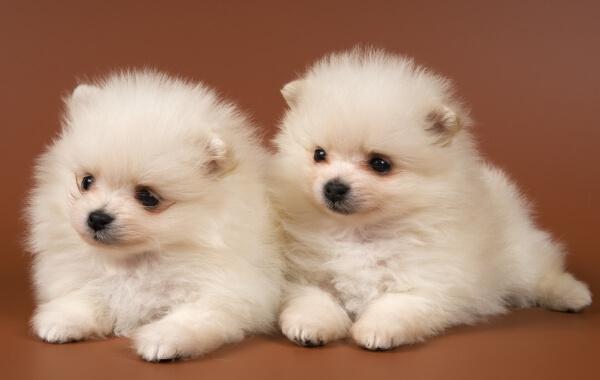 фото собачка маленькая