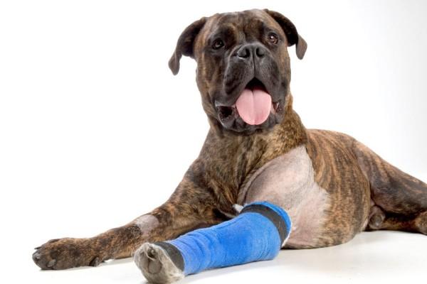 Артрит у собак: симптомы, препараты и как лечить разные формы ...