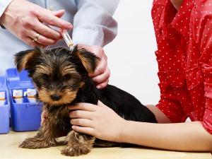 вакцинация кошек и собак против бешенства