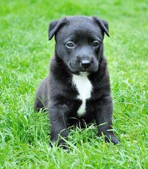 какая порода щенка