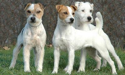 фото пород собак с названиями алабай
