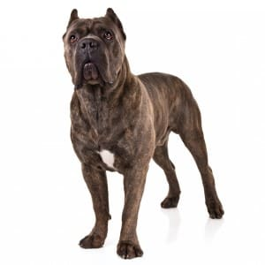 топ 10 злых собак