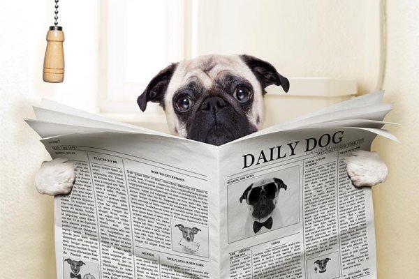 Картинки по запросу собаки когда хозяев нет дома