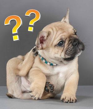 Собака — Википедия | 352x300
